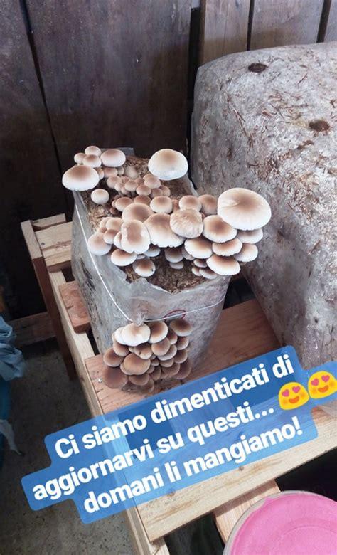 coltivare funghi in casa coltivare i funghi in casa dall orto alla tavola 232