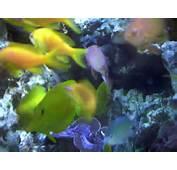 Sea Water Animals  Christine ODonnell