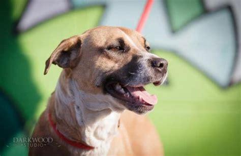guardians light dog rescue adopt a rescue dog salem needs a home future expat