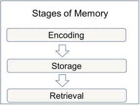 Memory encoding storage and retrieval simply psychology