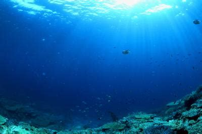 major facts   open ocean ecosystem sciencing
