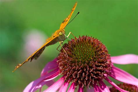 giardini botanici lombardia giardini in lombardia ville riserve orti botanici e