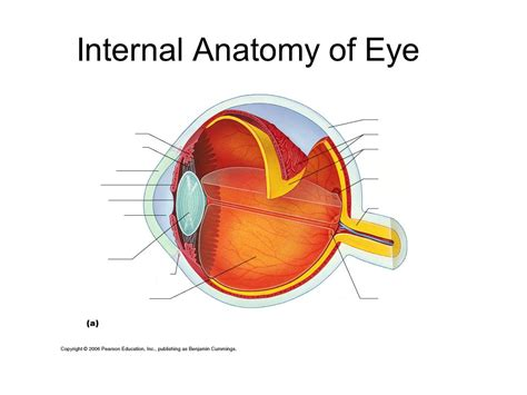 basic structures of the eye ppt download bell activity turn to chapter 8 special senses complete the worksheet ppt video online download