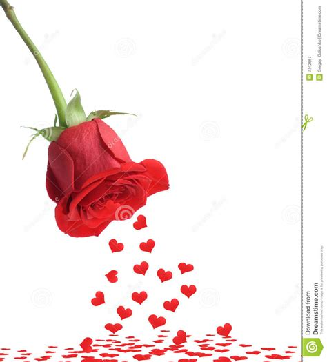 red rose and fall heart stock image image of green