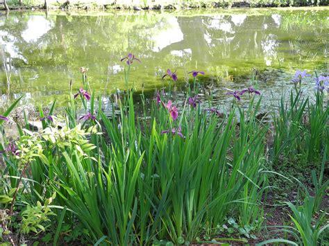 world  irises  iris center   universe revisited