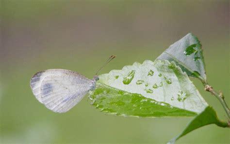 Wdd Tunik Kupu Kupu Putih my story kupu kupu