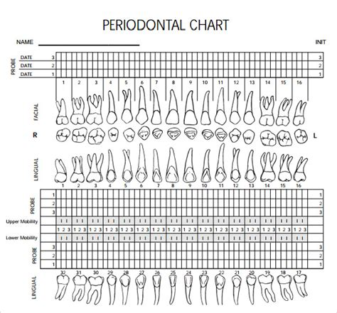 periodontal chart template blank chart templates 8 free documents in pdf