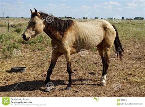 horse outside horse stock images image 4062214
