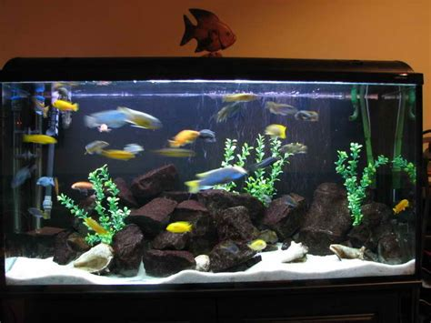design your aquarium online fish tank decoration ideas for goldfish fish tank