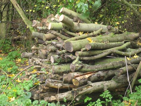woodworking for wildlife log and wood piles naturehoodwatch
