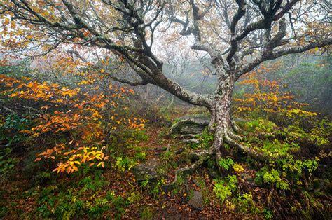 craggy gardens carolina blue ridge parkway autumn nc