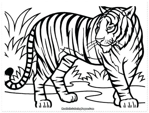 Tiger Cub Coloring Pages by Tiger Cub Coloring Pages Tiger Cub Coloring Pages Tiger