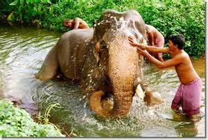 Bathing Photos Time For An Elephant Bath 187 Rocksea And