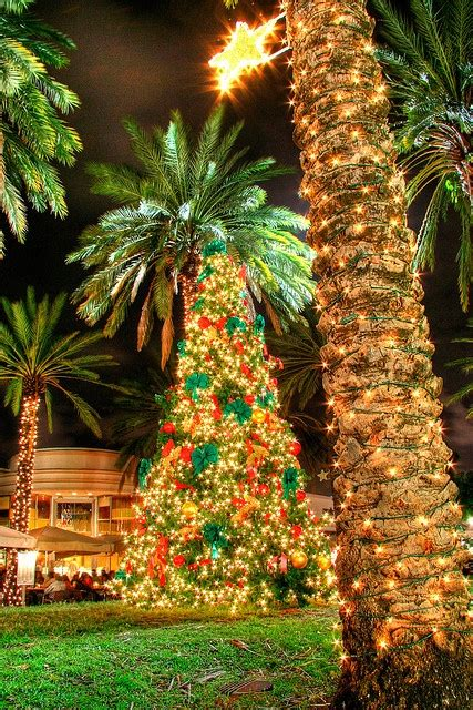 tropical lighted christmas tree 64 best lighted palm trees images on coastal lights and