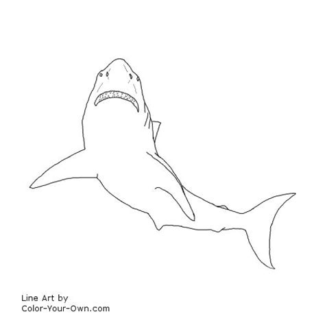 shark fin coloring page free coloring pages of shark fin