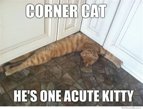Kitty Cat Meme - corner cat meme weknowmemes