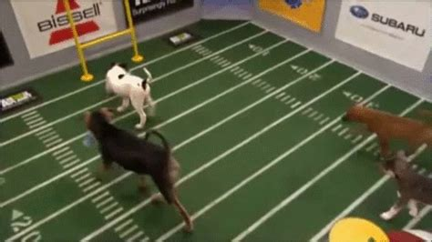 puppy bowl locker room here are all the gifs you ll need for puppy bowl ix the daily dot