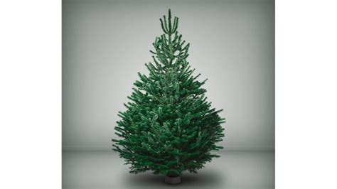 fabulous firs pines and needles premium christmas trees