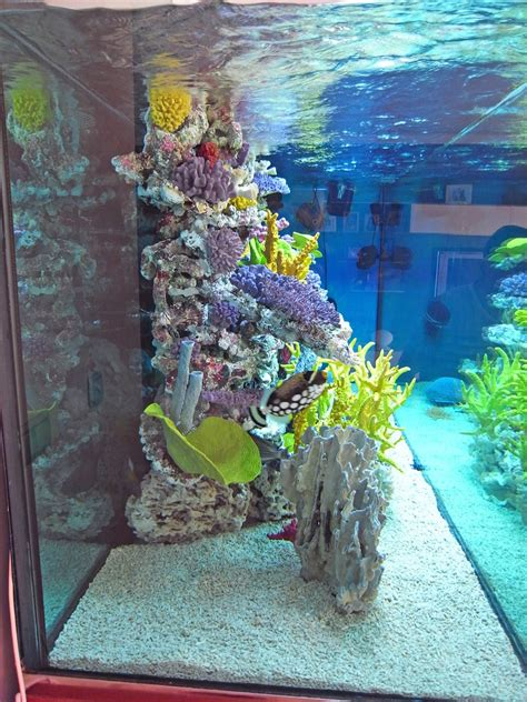 decoracion acuario decoraci 243 n de acuario marino aquadec