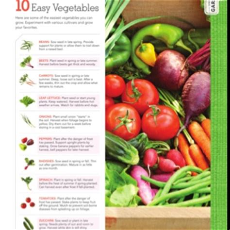 easy vegetables to grow redoing the backyard pinterest