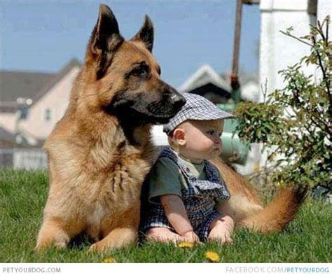 petyourdogcom pet  dog cute baby german shepherd