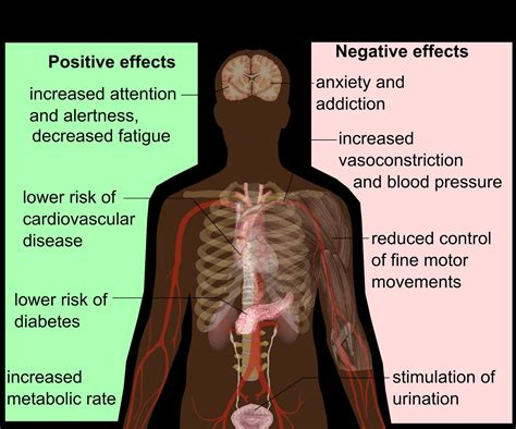 creatine negatives negative effects of caffeine on the 40 minutes