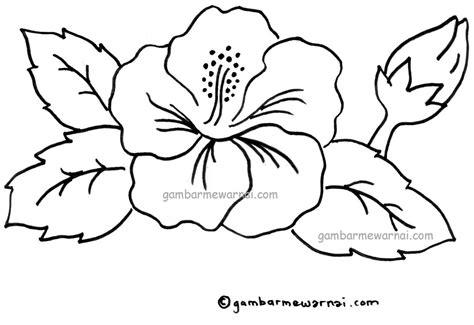 gambar mewarnai bunga kembang sepatu gambar