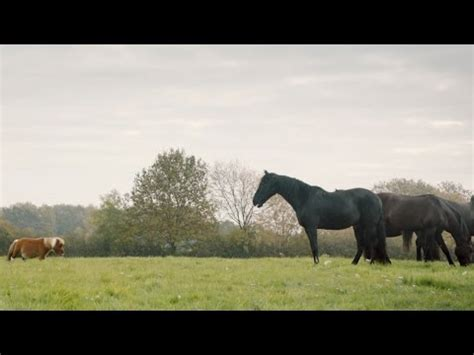 amazon prime commercial actress little man amazon prime lonely little horse ads of the world