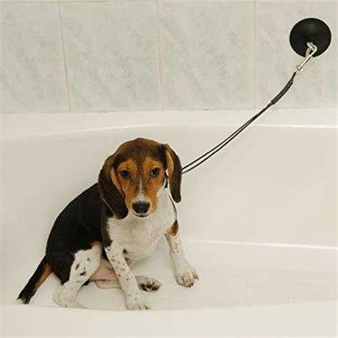 dog in a bathtub video dog grooming stay n wash tub restraint keeps dog in tub