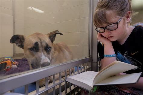 boxer puppies in missouri read to shelter dogs at the humane society of mo local stltoday
