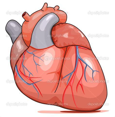 Is Jantung 4 fakta menarik tentang jantung kita threads id