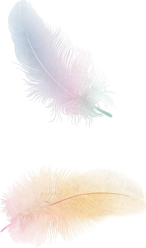 www feather feather png