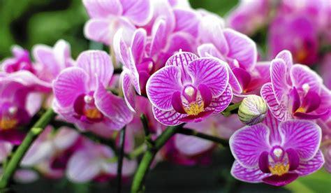 Bunga Anggrek Artifisialbunga Palsubunga Hias anggrek tanaman hias