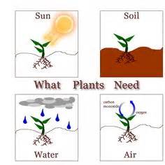 plants that need sunlight 1000 images about infographics on pinterest whole body