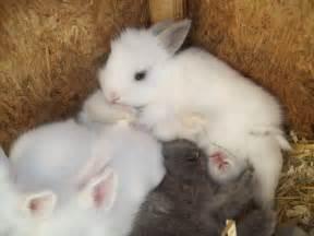 rabbit bunny bunny bunny rabbits photo 30656698 fanpop