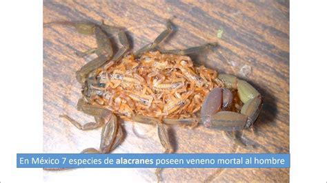 imagenes de animales venenosos los 10 animales mas venenosos de m 233 xico youtube