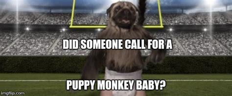 puppy monkey baby gif puppy monkey baby imgflip