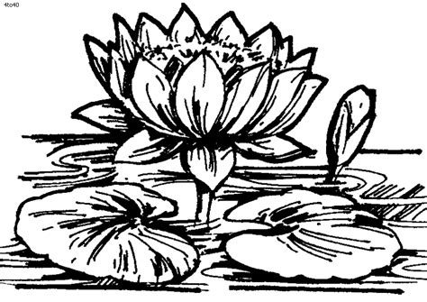 coloring pages for kids lotus flower coloring pages for kids