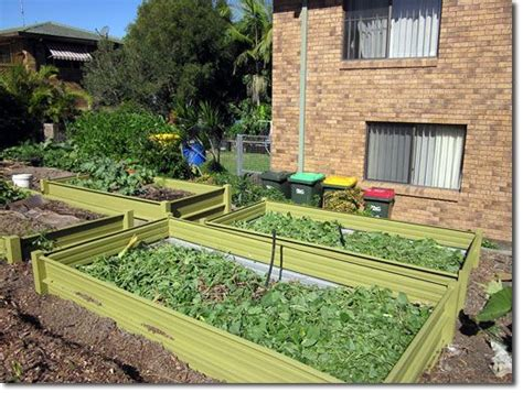 Cheap Raised Garden Bed Ideas 168 Best Images About Alternative Lawns Groundcovers Steppable Plants On Gardens