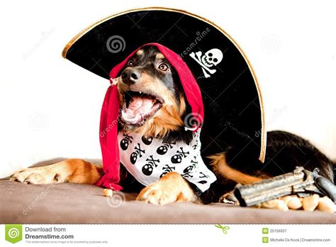 pirate puppy pirate puppy royalty free stock photography image 25156937