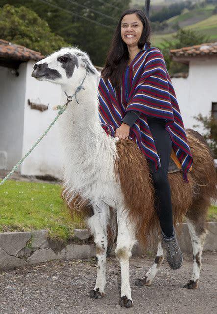 llama flickr photo sharing