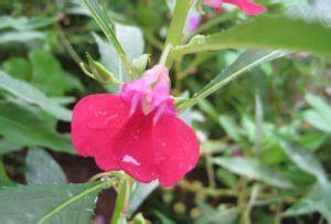 fiori di bach per bambini iperattivi pronto soccorso per il bambino il rescue remedy bambino