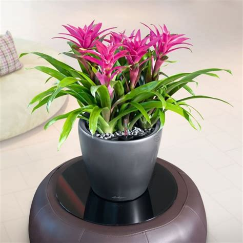 Plants In Planters by Flowering Indoor Office Plant Range Eco Green Office Plants