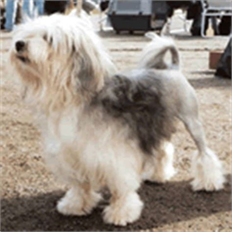 breeds that start with l small breeds that start with quot l quot list