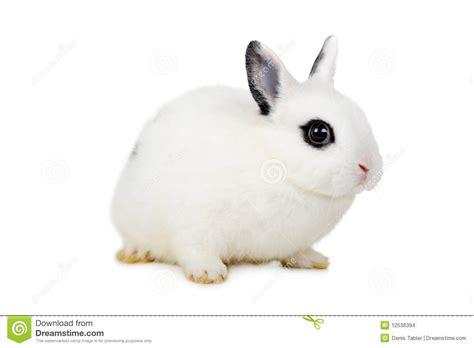 Rabbit L l beautiful rabbit stock images image 12536394