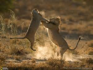 nat geo photo contest 2016 winners national geographic photo contest 2016 manify nl play hard
