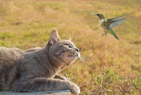 five neat tricks to keep your cat from attacking birds