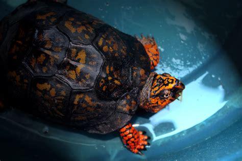 elissa marie orange turtle
