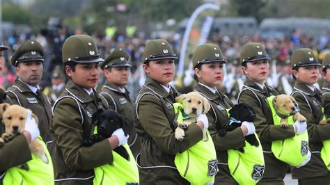 selecci 243 n colombia tendr 237 a su formaci 243 n confirmada para jugar ante chile por eliminatorias hsb imagenes de carabineros de chile grandes imagenes perros de carabineros participan en arenga a