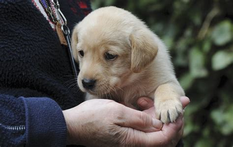 when should you start a puppy gundog when should i start with my puppy